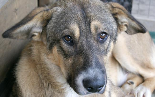 Фото: Животные на улице (About-Dogs.ru)