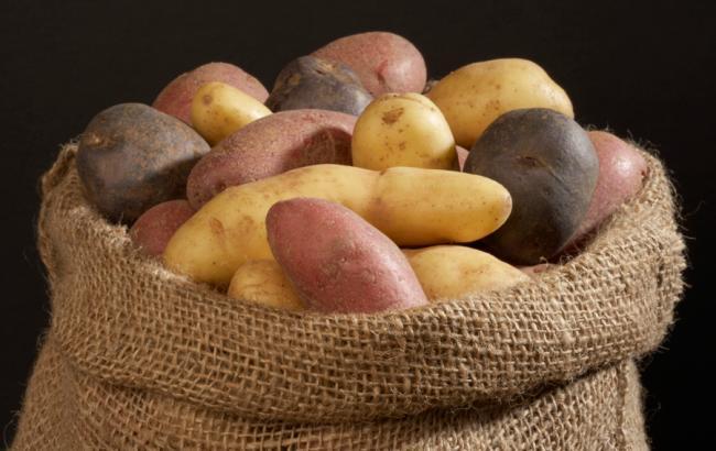 Фото: Картопля (ngs24.ru)