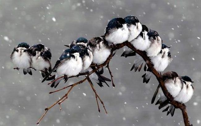 Фото: Птицы под снегом (ZN.ua)