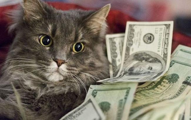 Фото: Кот и доллары (kaspyinfo.ru)
