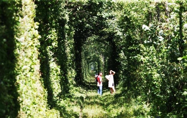 Фото: Тунель кохання в Рівненській області (unn.com.ua)