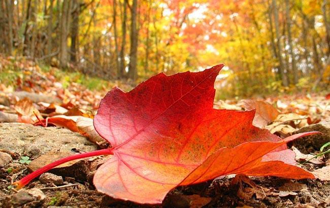 Фото: Тепла осінь (sibdepo.ru)