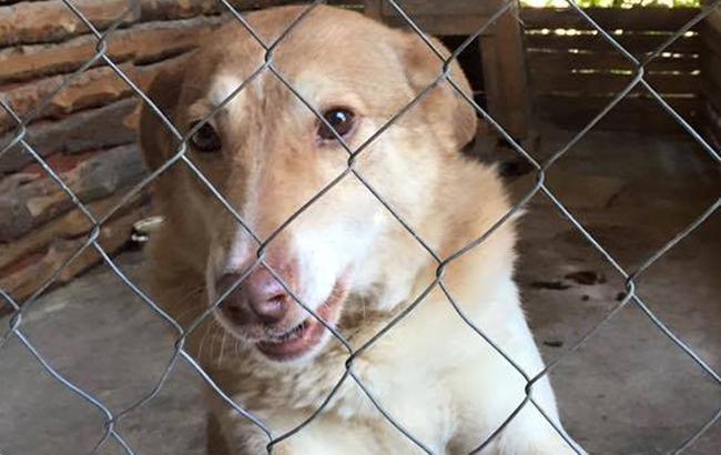 Фото: Собака в притулку (facebook.com)