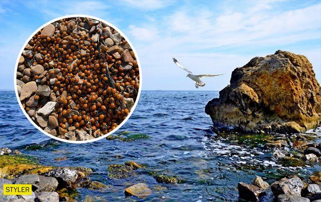 Пляжі Одеси атакували полчища жуків! Погляньте на ці фото