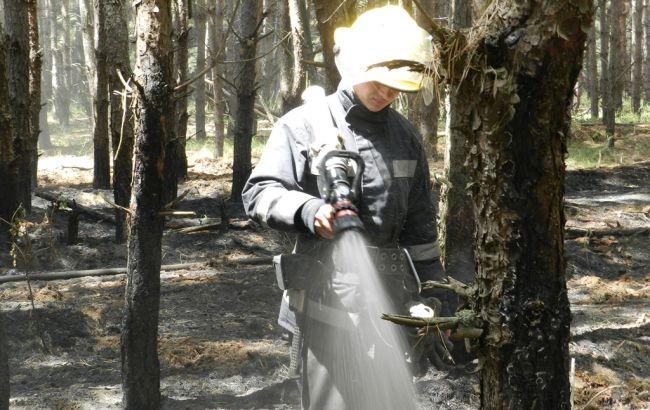 УХерсонській області виникла пожежа натериторії Дніпровського лісництва