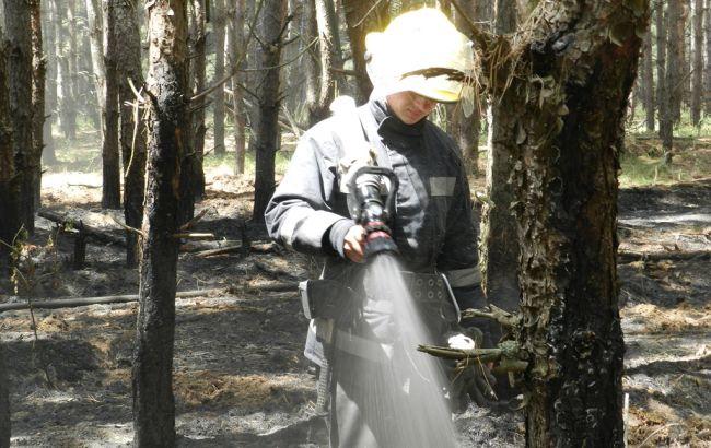 Фото: ликвидация лесного пожара в Херсонской области (пресс-центр ГСЧС)
