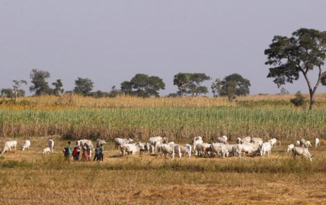 В Нигерии за 2 года столкновений между фермерами и пастухами погибло более 3 тыс. человек