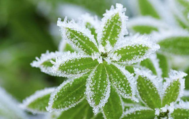 В Україні попередили про нічні заморозки