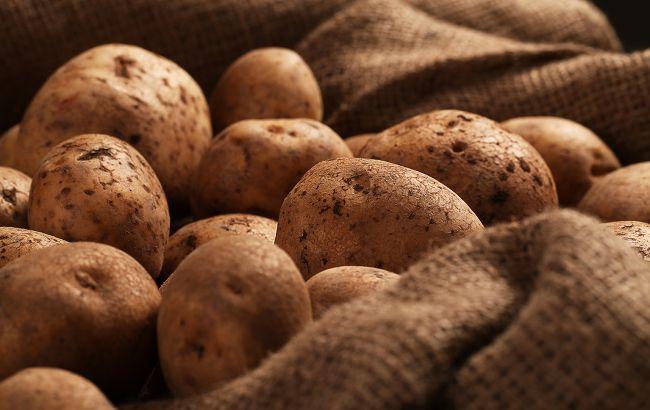 В украинской картошке обнаружили рак: опасен ли такой овощ?