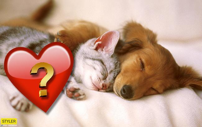 Кішки або собаки: яких тварин частіше заводять українці