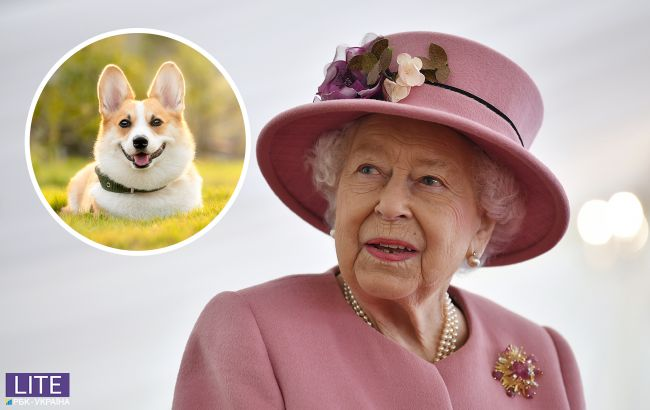 """В Королевском дворце """"пополнение"""": Елизавета II завела новых питомцев"""
