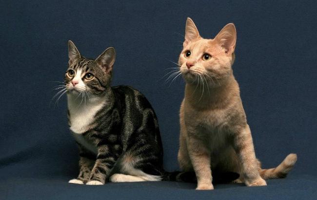 Коты просят еду по звонку