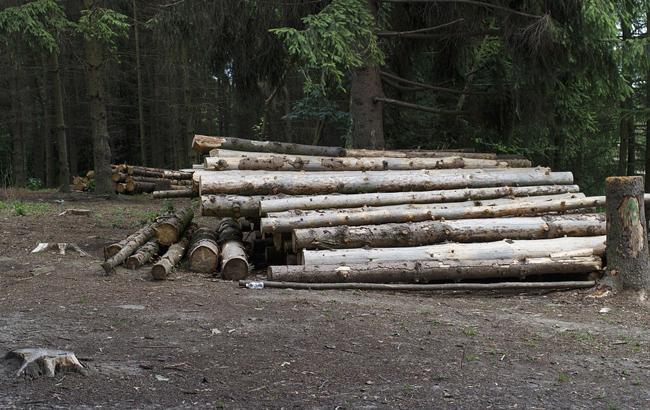 Фото: Вырубка леса (pixabay.com/Pavlofox)