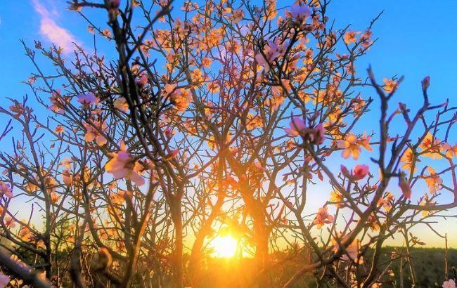 Весна наступає надто швидко: в Україні прогнозують аномальну спеку