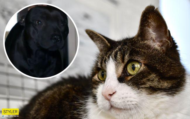 У Києві бійцівський пес роздер кішку: мешканці мікрорайону бояться за свої життя