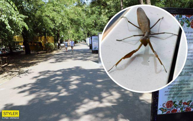 У парку Одеси знайшли рідкісну комаху з Закавказзя (фото)