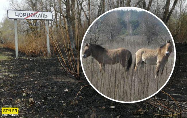 Уникальные животные возвращаются в Чернобыль после пожара: трогательное видео
