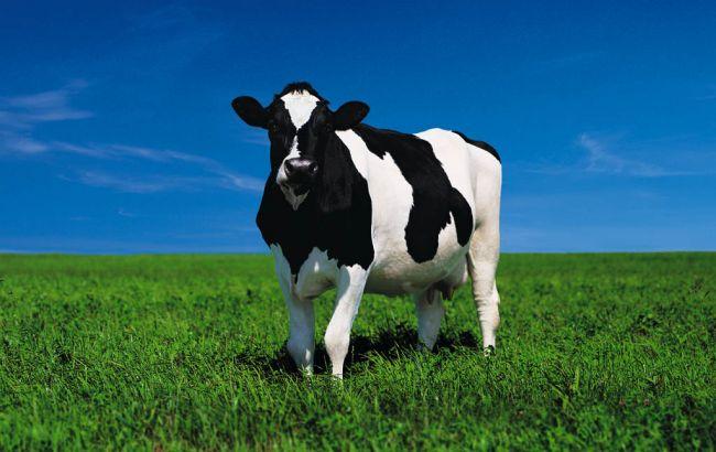 Фото: за грудень поголів'я худоби суттєво скоротилося