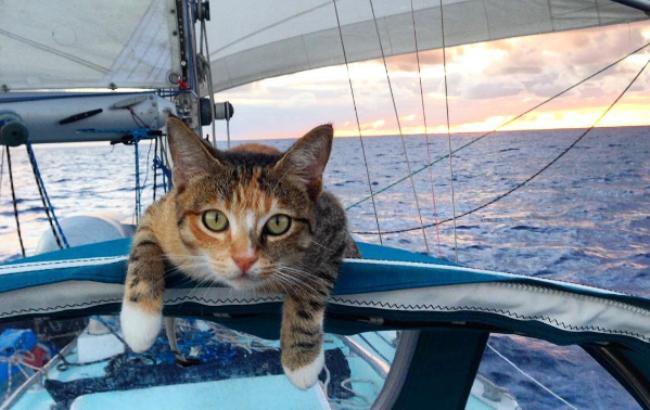 Кошка стала звездой Instagram благодаря морским путешествиям