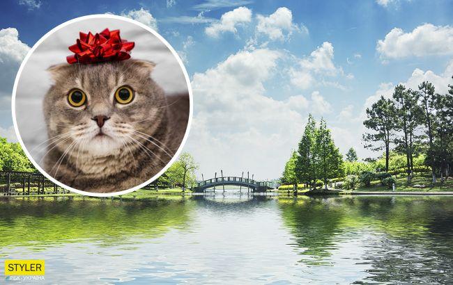В центре Киева нашли озеро в форме кота и хотят сделать там парк мечты