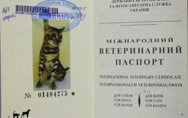 Паспорт для кота украина