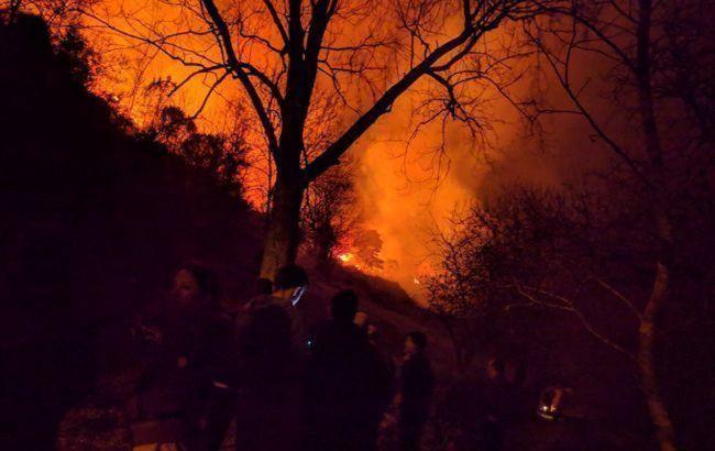 В Ізраїлі через спеку спалахнули лісові пожежі