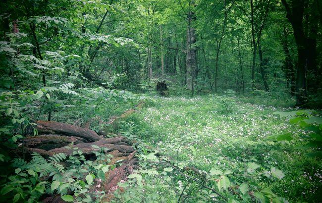 Суд повернув державі земельні ділянки Голосіївського парку