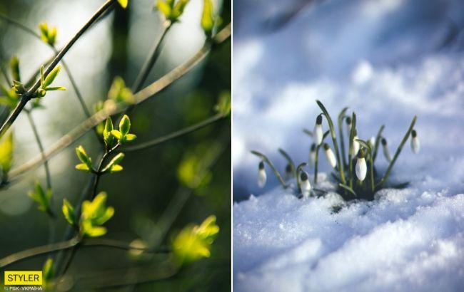 Запахне весною: синоптик дала теплий прогноз на понеділок