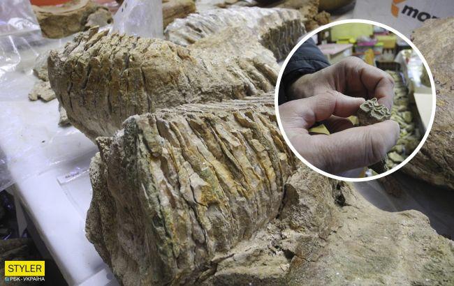 В Україні розкопали 300-тисячолітній зуб мамонта: фото сенсаційної знахідки
