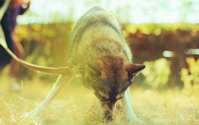 Фото: Мама-волк (Пресс-служба)