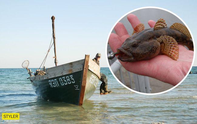 В Азовском море вымирает рыба: названы причины