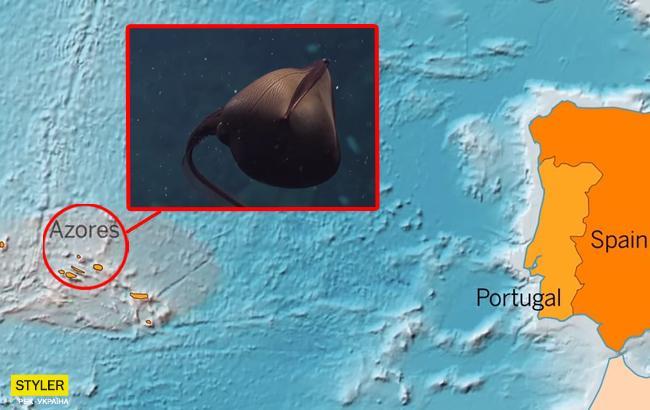 Загадочный монстр: в океане нашли гибрид пеликана с угрем
