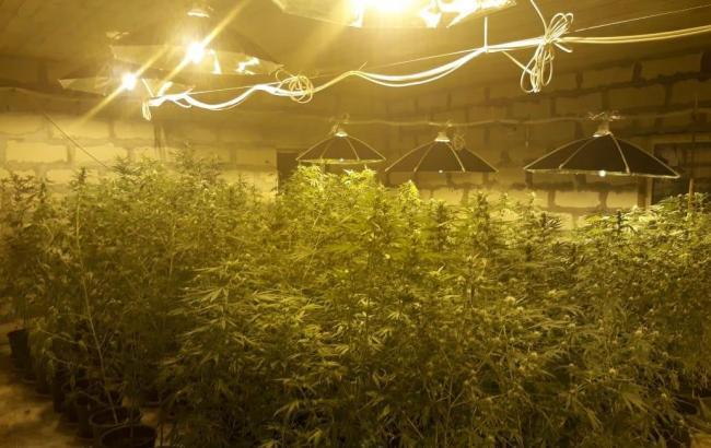 Киевская конопля марихуаны купить екатеринбург
