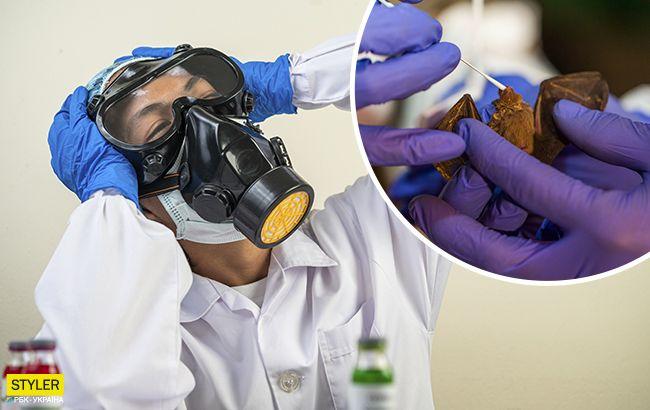 Ученые обнаружилиеще один тип коронавирусау летучих мышей: что известно