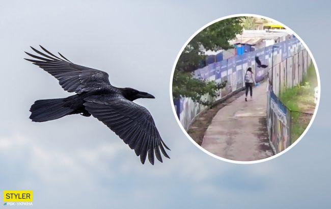 В Киеве очередная атака ворон на людей попала на видео: почему нападают птицы
