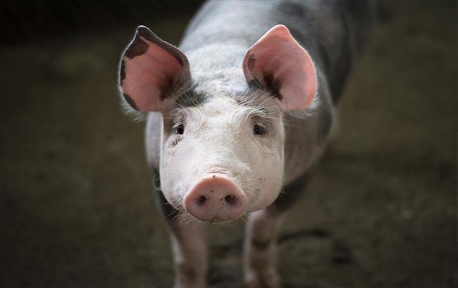 """""""Не свиньи, а пегасы"""": фото из российского супермаркета насмешило сеть"""