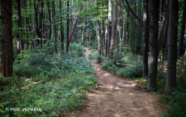 У Херсонській області заборонили пікніки в лісах на травневі свята