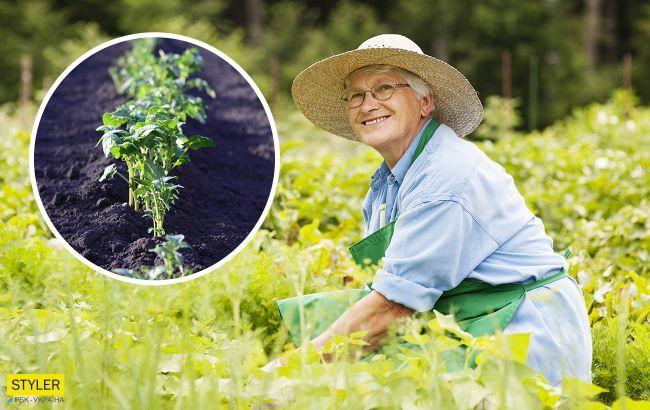 Як отримати рясний урожай картоплі: експерти розсекретили реальний спосіб