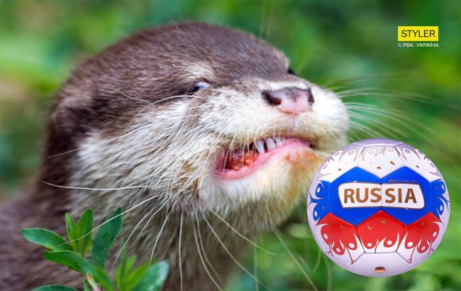 Тварина-оракул передбачила переможця фіналу ЧС-2018