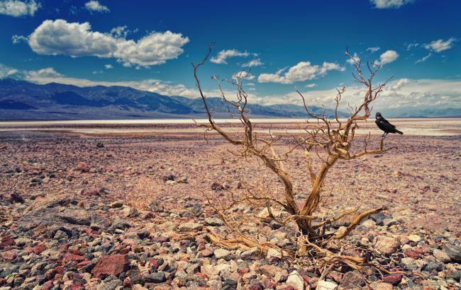 Новый процесс принесет волну аномалий: эксперт дала прогноз на лето 2020