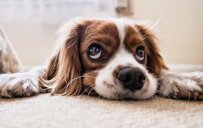 Що робитимуть з конфіскованими тваринами: Кабмін прийняв рішення