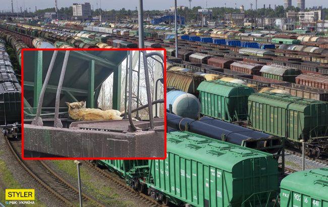 Жестокость под Днепром: живодер привязал собаку к поезду