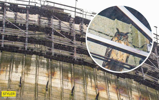 В Чернобыле огромная хищная птица поселилась прямо на градирне ЧАЭС (фото)