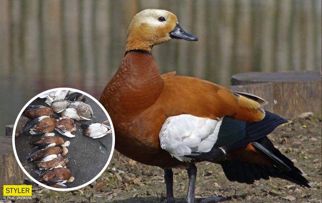 В украинском заповеднике снова погибли краснокнижные птицы: 3-й случай за 3 месяца