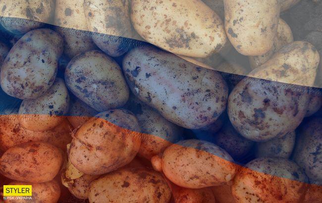 В Україні можуть заборонити російську картоплю: в чому причина