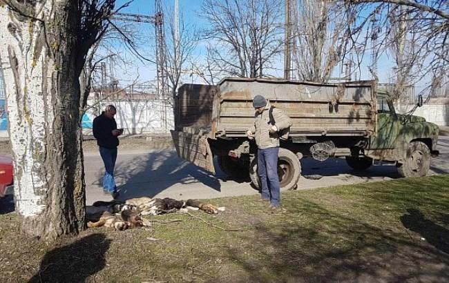 Догхантери на полюванні: у Бердянськувиявили масове вбивство собак