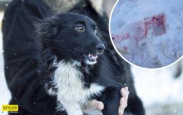 Разгадана тайна розового снега в Киеве: чем оказалось вещество на самом деле
