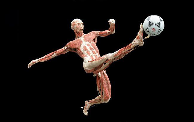 """BODY WORLDS - """"Всесвіт тіла"""" продовжено до 19 січня (фото: bodyworlds.com.ua)"""
