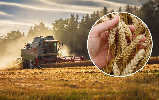 В Україні буде найбільший врожай з часів Київської Русі: які культури б'ють рекорди і чому