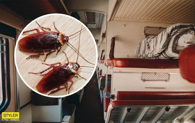 В поезде Укрзализныци нашествие рыжих гостей: пассажиры шокированы